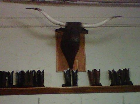 6-mounted-bull