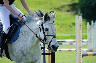ID-10082549 horse racing