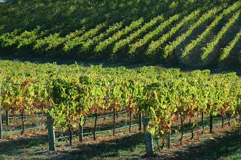 adelaide-hills-vineyards_l