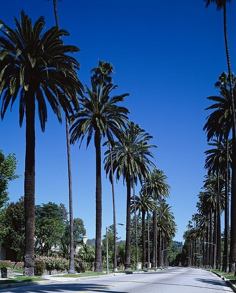 palm-trees-743842_640